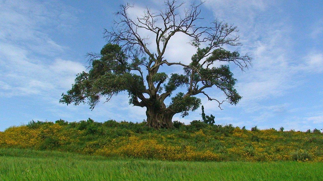 Opter pour la beauté de la nature pour un voyage parfait en Ethiopie !