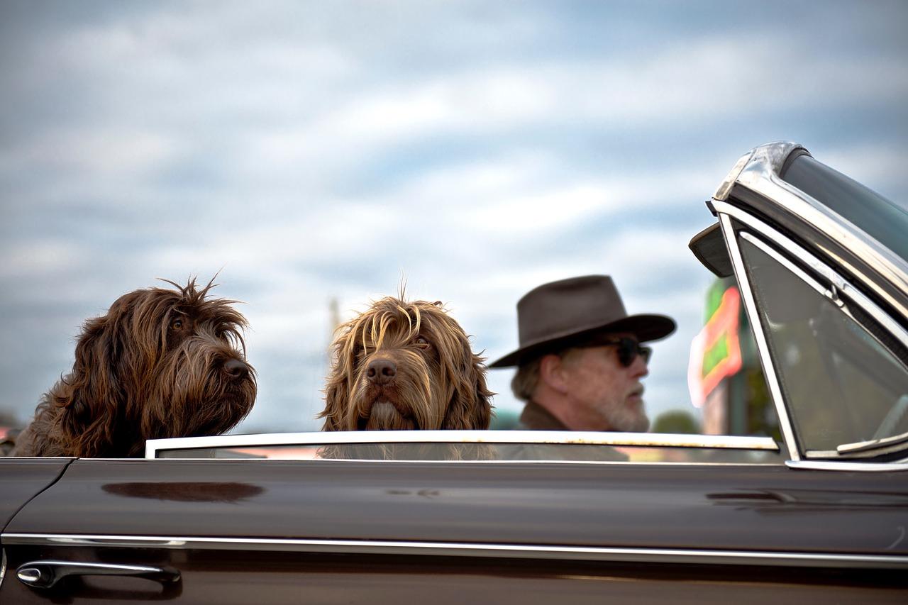 Ce qu'il faut savoir avant de voyager avec son chien en voiture !